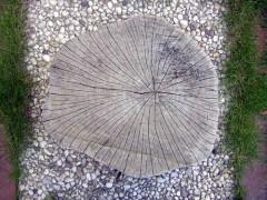 Wenn es warm und trocken ist, zieht sich das Holz zusammen und die Scheibe bekommt tiefe Risse, die sich schließen, sobald es wieder feuchter wird.