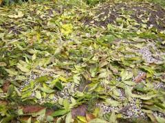 Die Herbststürme reißen das letzte Laub von den Bäumen und decken damit großzügig den Boden ab, in dem ihr eure Wege mit Steinplatten befestigt habt.