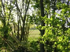 Maßlose Freude über das goldgelbe Abendlicht in den Baumwipfeln und auf den Feldern.