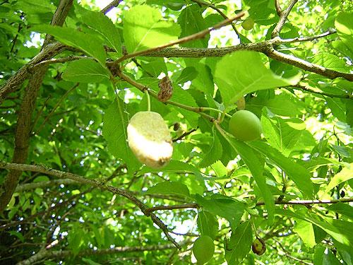 Die einen Früchte reifen, die anderen gammeln weg.