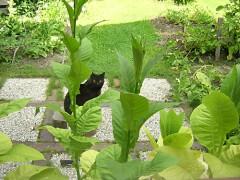 Im Frühsommer hast du deine Pflänzchen hauptsächlich in Blumenkästen ausgepflanzt - das hält sie mobil.